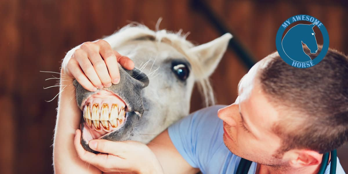 Pferdedentist My Awesome Horse